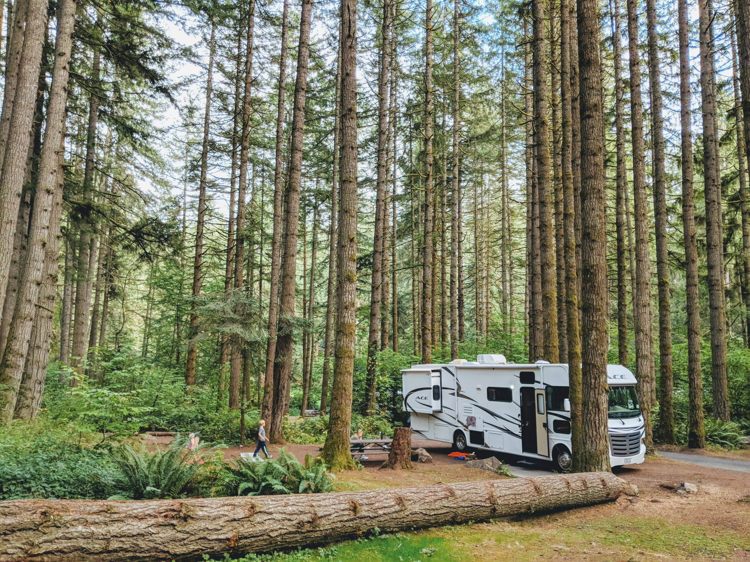 RV Among Tall Trees